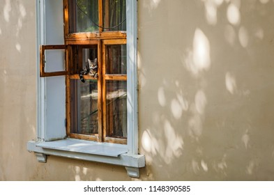 Striped cat in a wooden window with a cache of an old house