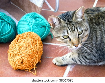 Striped Cat with yarn