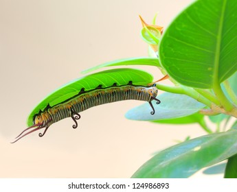 Striped caterpillar on a branch
