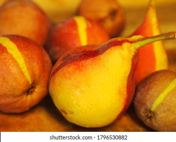 Striped chimera pears, a genetic freak combining Bartlett and Red Bartlett pears.