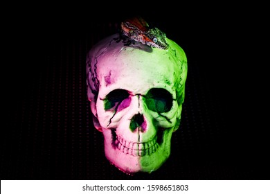 striped crested gecko laying on top of a human skull where purple and green lights light it up against a black background.