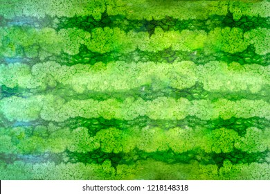 Striped crust of watermelon, background, texture