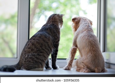 Striped, gray cat and dog  sitting on the window