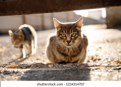 striped gray stray cat looks into the camera on the street. cats under sunlight. abandoned pets. animal protection