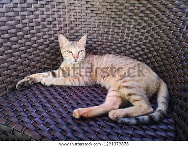 striped grey cat