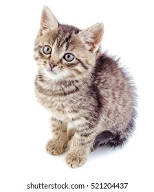 Striped grey kitten isolated on white background. Striped not purebred kitten.