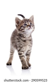 Striped kitten costs on a white background.