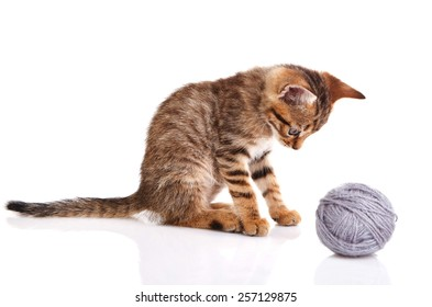 striped kitten with gray ball on white background