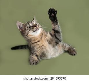 Striped kitten lying on green background