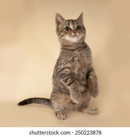 Striped kitten standing on yellow background