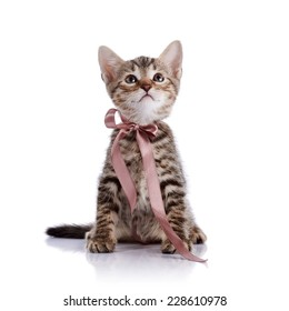 Striped kitten with a tape. Striped not purebred kitten. Kitten on a white background. Small predator. Small cat.