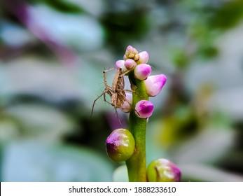 Striped lynx spider on Basella Plants garden spider yellow spider on leaf in indian village garden spider image