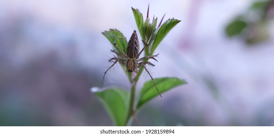 Striped lynx spider on leaf garden striped lynx spider in indian village image yellow spider image