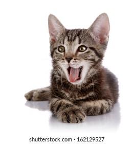 Striped not purebred kitten. Kitten on a white background. Small predator. Small cat.