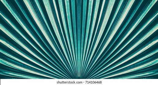 Striped of palm leaf, Abstract green texture from nature background, Vintage tone