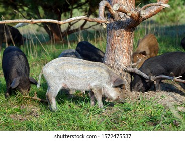 Striped piglets similar to wild piglets grown in a natural environment