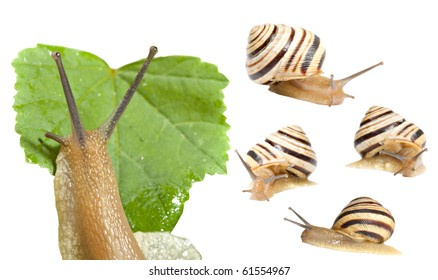 striped snail on a white background, a set of five images
