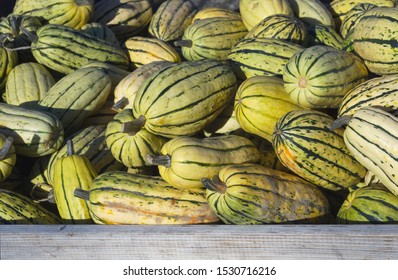 striped squashes organic agriculture market vegetarian food