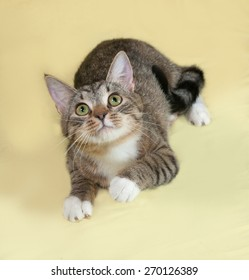 Striped and white cat lies on yellow background