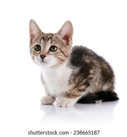 Striped with white a Small kitten. Not purebred kitten. Kitten on a white background. Small predator. Small cat.