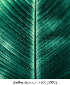 stripes of green foliage background, details of tropical leaf