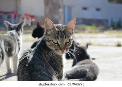 stripped cat facing camera