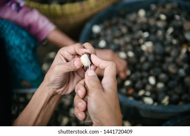 stripping candlenut shells in a village