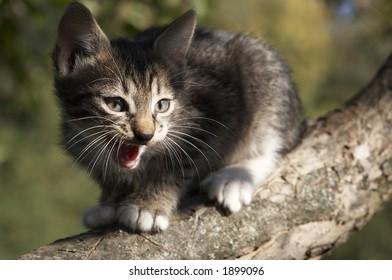Stripy kitten on a tree