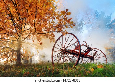 stroll early in the misty morning with autumn highlights