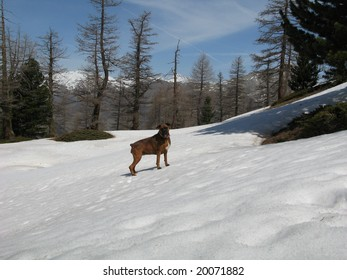 Stroll in images in the tray (plateau) of Baysses, in the spring, in the Hautes-Alpes, FRANCE