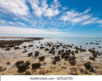 The Stromatolites in the Area of Shark Bay, Western Australia. Australasia
