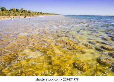 Stromatolites Australia rare biofilm microorganisms fossil