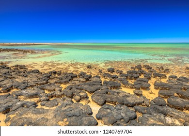 Stromatolites at Hamelin Pool, a protected Marine Nature Reserve in Shark Bay, Western Australia. Landscape of turquoise sea of Australian reef in sunny day with blue sky. Horizon wallpaper.