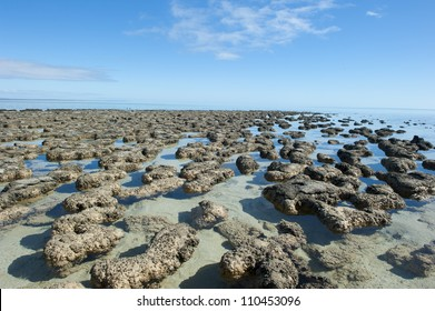 Stromatolites in the World Heritage Area of Shark Bay, Western Australia, most likely earths first living microorganisms and producer of oxygen, around 3 billion years ago.