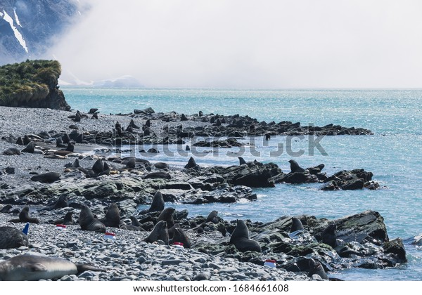 Stromness Bay in South Georgia and Shackleton Hike