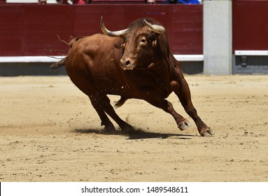 Strong bull with big horns running in spanish bullring