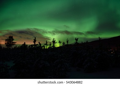 strong dreamy aurora borealis on star filled nigh sky over spruce trees and snowy field