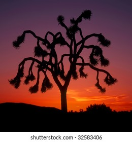 Strong graphic silhouette of single Joshua tree against orange and purple sunset; square format