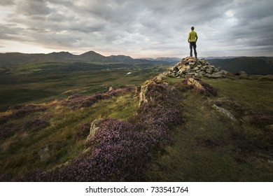 Strong hiker overlooking the beautiful mountains of the lake district at sunset with sunlight lit purple heathland