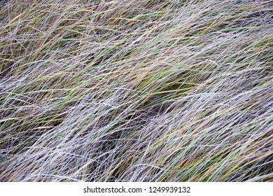 Strong ice grass with ice crystals