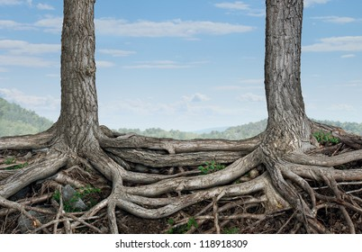 Strong partnership and foundation as a business concept of stability and loyalty with two trees with roots connected together as a symbol of agreement and merging forces together for success.