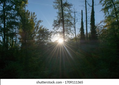 Strong rays of the sun between the trees