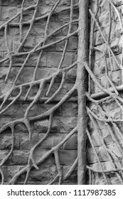 strong roots on wall