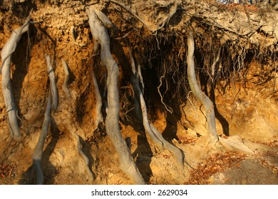 Strong roots piercing the earth