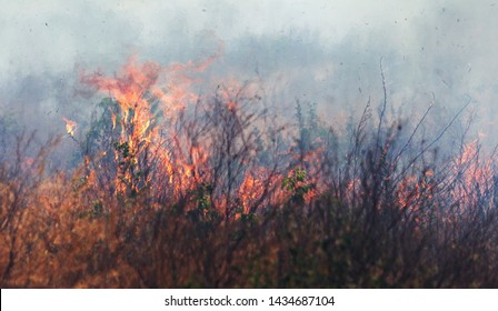 Strong smoke in steppe. Forest and steppe fires destroy fields and steppes during severe droughts. Fire, strong smoke. Blur focus due to jitter of hot hot fire. Disaster, damage, risk to houses