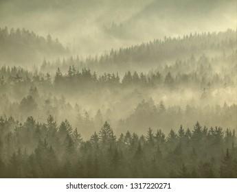 Strong sun rays illuminating sharp treetops of misty forest scenery with fresh and vibrant orange foliage