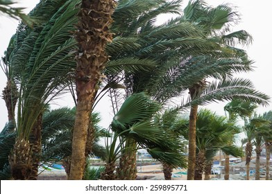 Strong wind on the coast in a tropical climate. Palm trees bend in the wind in inclement weather. Coastal view with palms of a hurricane wind.