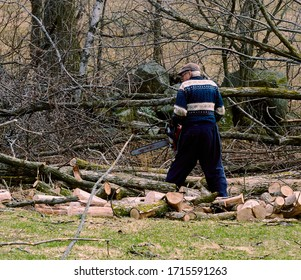 With strong winds a tree fell and the person made logs to make fires. There are many branches. Ulverton, Quebec, Canada; April 3, 2020.