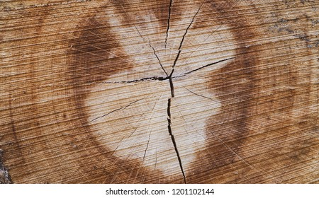 Structural wooden background, cutting tree trunk