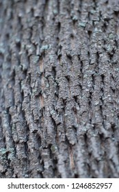 The structure of the bark of a tree trunk